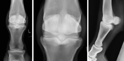 february 2013 large animal case orthovetsupersite